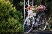 picture of lilac bush  - Nice lilac bicycle with pretty twisted basket of colored roses in it standing near the green bushes - JPG