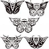 night butterfly, hawkmoth