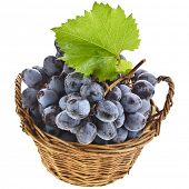 Ripe dark grapes in basket isolated on white background