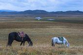 landscape, animal in tibet china.