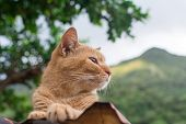 Ginger tabby cat lying on the roof and looking far in the cat village of Houtong, Taiwan.