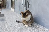 Tabby cat sitting in front of the house and washing it's face in the cat village of Houtong, Taiwan.