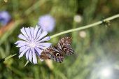 Beautiful flowers with butterfly in field