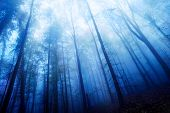 Blue Twilight Mood In A Foggy Wood