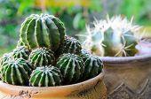 Closeup Of Potted Cactus (plant) On Windowsill