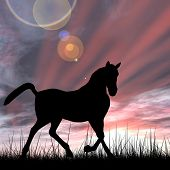 Concept or conceptual young beautiful black horse silhouette in grass or meadow over a sky at sunset landscape background