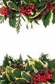 Christmas and winter background border with variegated holly, ivy, mistletoe, pine cones and cedar l