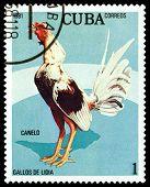 Vintage  Postage Stamp. Canelo Cock.