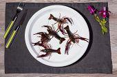 live shrimp on a plate