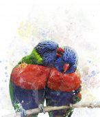 picture of lorikeets  - Digital Painting Of Rainbow Lorikeet Parrots - JPG