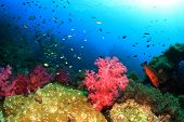 Underwater coral reef in ocean
