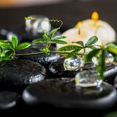 Beautiful Spa Background Of Green Twig Passionflower With Tendril, Ice And Candles On Zen Basalt Sto
