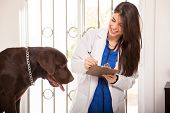 Updating A Dog's Medical History