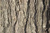Tree Bark Background