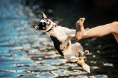 Black And White Mongrel Dog Jumping From Foot