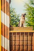 Curly Brown Dog Jumping Sitting At Construction Site