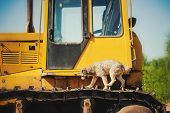 Curly Brown Dog Jumping Running On A Construction Machine