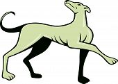 Greyhound Dog Marching Looking Up Cartoon