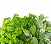 Постер, плакат: Fresh Herbs Over White Background Healthy Food Ingredients