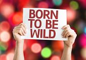 Born to be Wild card with colorful background with defocused lights