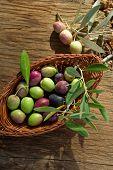 basket with olive branch