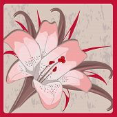 pink lily on a gray background in frame.
