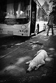 Dog sleeping on the sidewalk