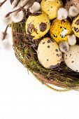 Easter Eggs In The Nest With Narcissus