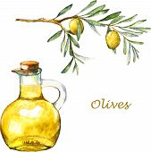 Watercolor illustration with green olive branch and olive oil in the bottle