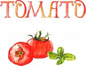 Watercolor illustration with tomatoes fruits and handwritten word Tomato