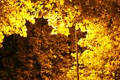 Gold lit tree