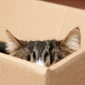 Cute cat sitting in cardboard box