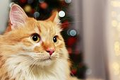 stock photo of lovable  - Lovable red cat on lights background - JPG