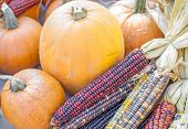Pumpkin And Colored Corn At A Farmers Market