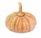 Pumpkin - Cucurbita Moschata Decne. - Isolated