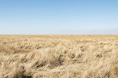 picture of dune grass  - Dune grass in northern Germany on a sunny day with blue sky - JPG