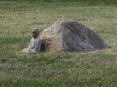 Buddha By A Rock On Grass