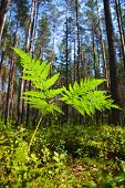 A fern at sunny summer forest