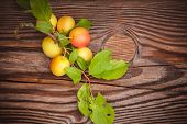 Wild Yellow Plum With Leafs
