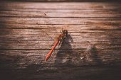 Orange Dragonfly On Wooden Texture