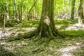 pic of swamps  - cypress forest and swamp of Congaree National Park in South Carolina - JPG