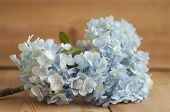 image of hydrangea  - Closed up blue Hydrangea flower on wood background - JPG