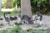 pic of puss  - Kittens playing - JPG