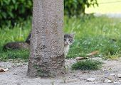 pic of baby cat  - Cat is hiding and peeking behind the tree - JPG