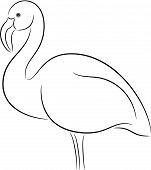 foto of flamingo  - Vector Illustration of a flamingo bird - JPG
