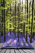 picture of harebell  - Creative concept image Beautiful landscape of Spring bluebells in forest - JPG