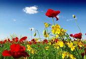 image of nubian  - wild flowers - JPG