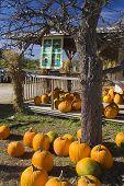 Pumpkins_2222