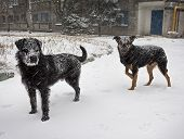 image of stray dog  - Hungry stray dog during a snowstorm - JPG