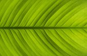 picture of macro  - green leaves close up macro bacground and texture photo - JPG